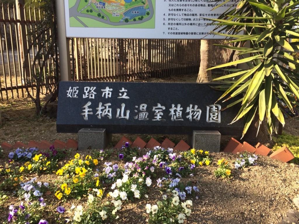 手柄山温室植物園_253