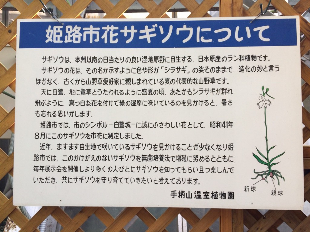 手柄山温室植物園_2540