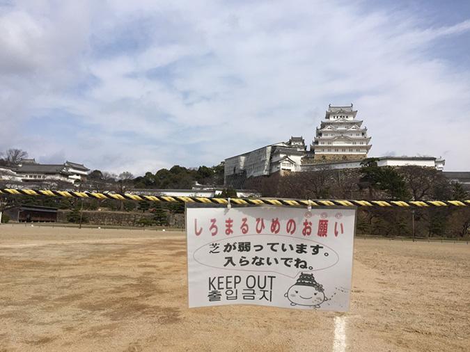 今日の姫路城-姫路マラソンの次の日_8961