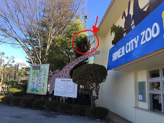 姫路城記念撮影の岩のとこを剪定してた_5431