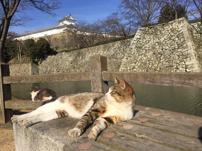 今日の姫路城城_2488