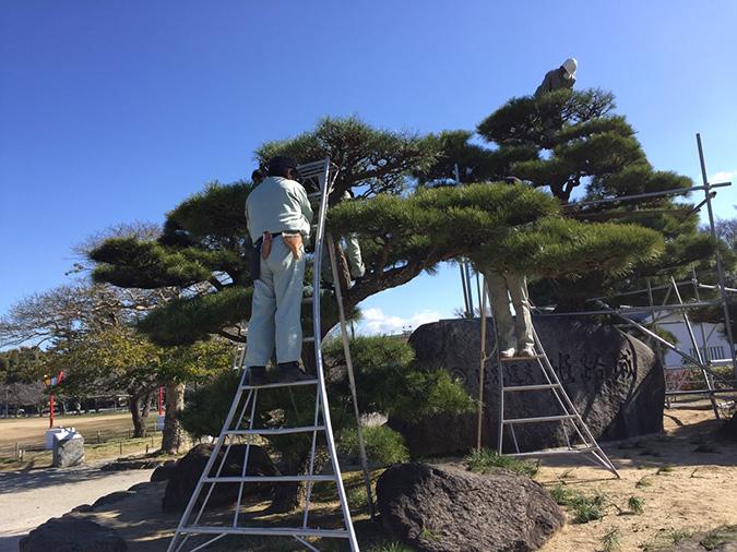 姫路城記念撮影の岩のとこを剪定してた_8224