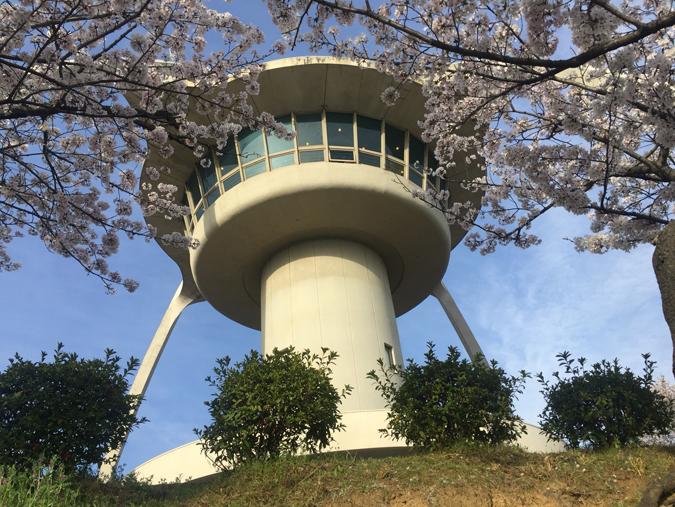 今日の姫路城手柄山の桜満開_611