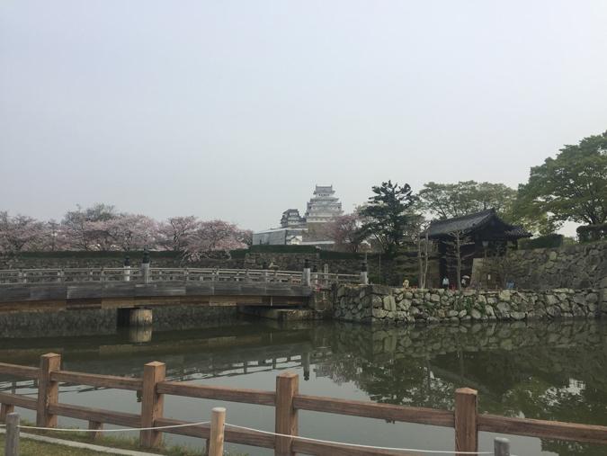 49姫路城桜情報_9411