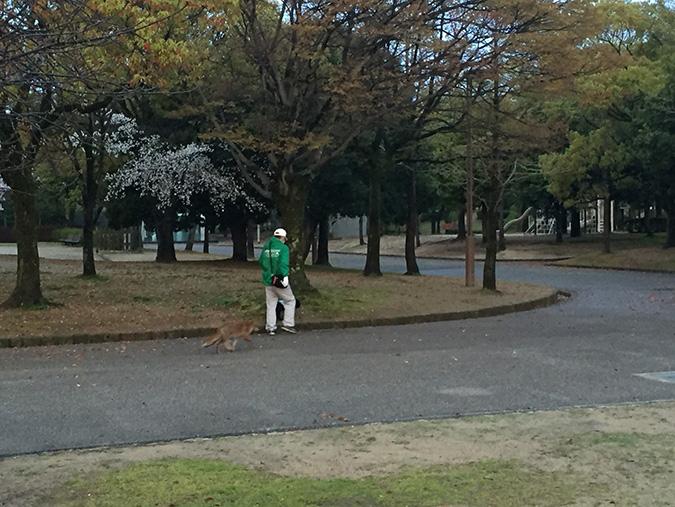 48桜散り始め_6265