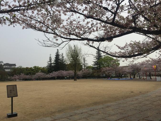 49姫路城桜情報_8463