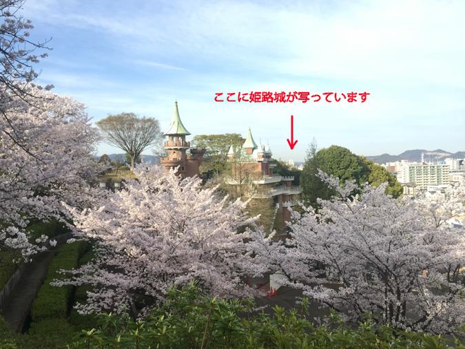 今日の姫路城手柄山の桜満開_2366