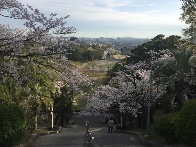 今日の姫路城手柄山の桜満開_8402