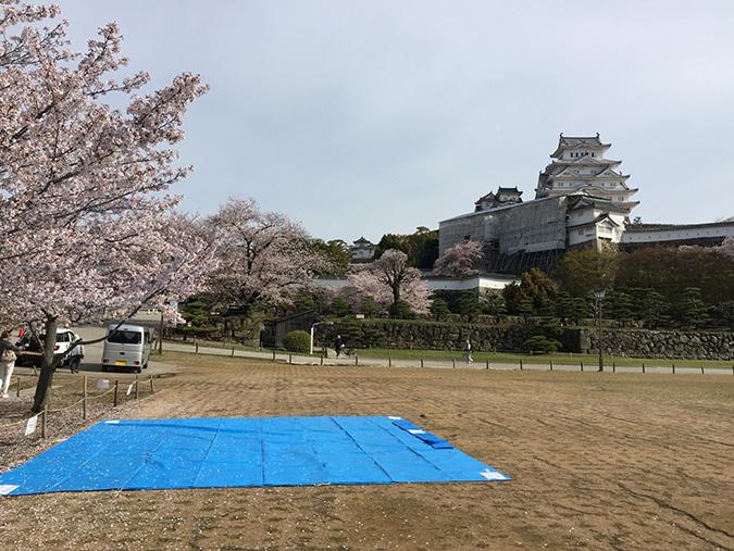 48桜散り始め_8091