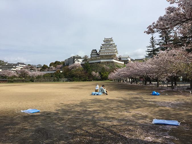 48桜散り始め_1821