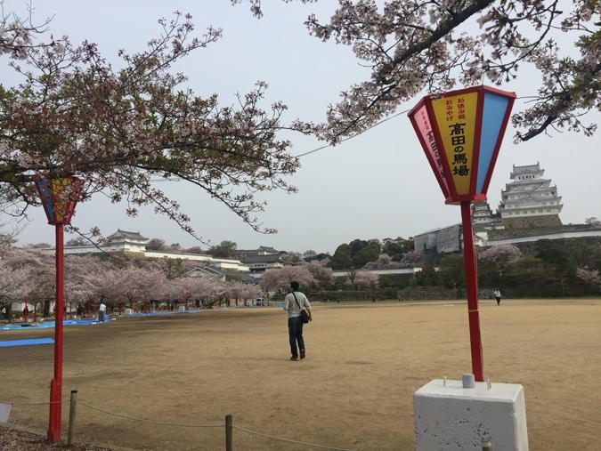 49姫路城桜情報_9512