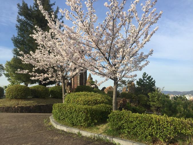 今日の姫路城手柄山の桜満開_4797