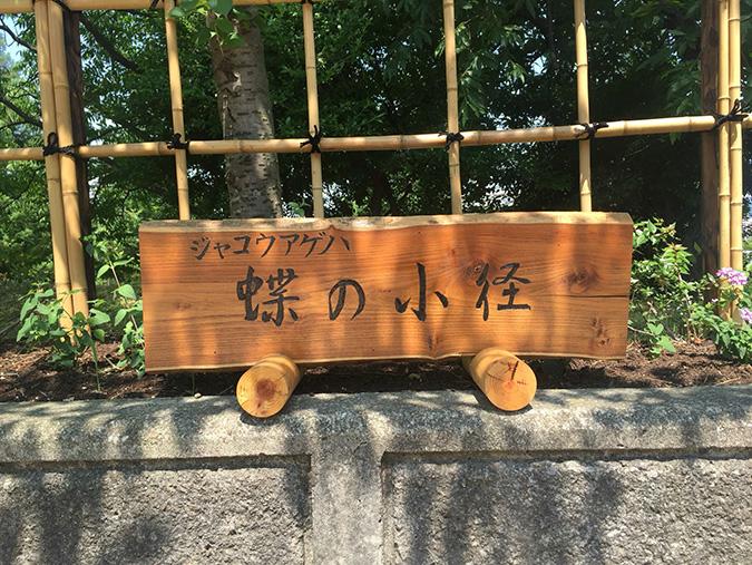 蝶_1610