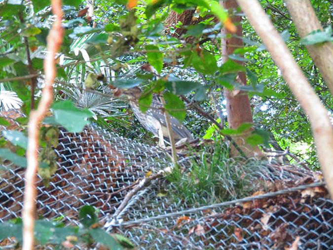 手柄シラサギの巣5