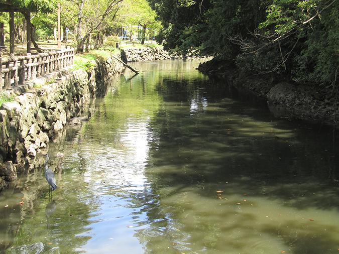 今日の姫路城水位が下がって13