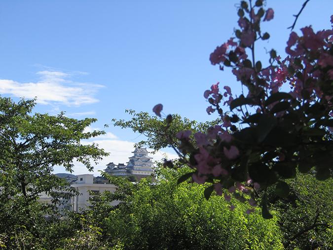 サルスベリ姫路城4