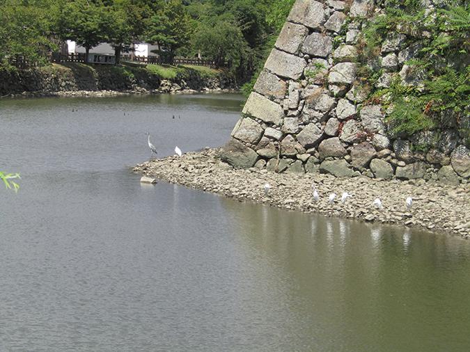 今日の姫路城水位が下がって10