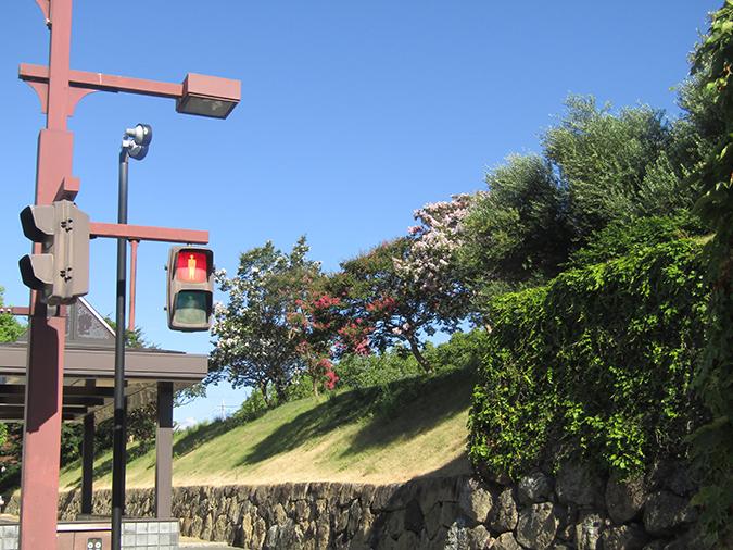 サルスベリ姫路城7
