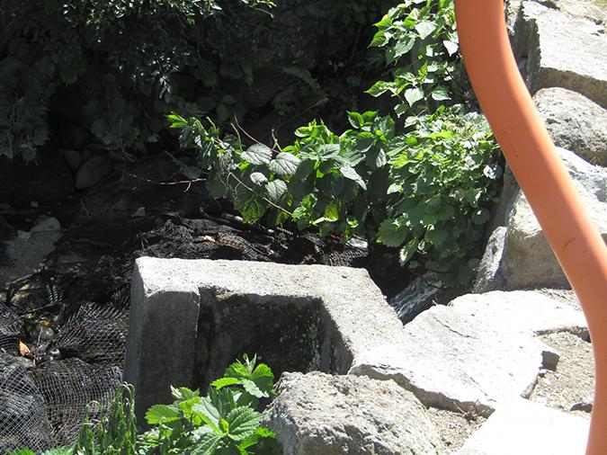 今日の姫路城水位が下がって14