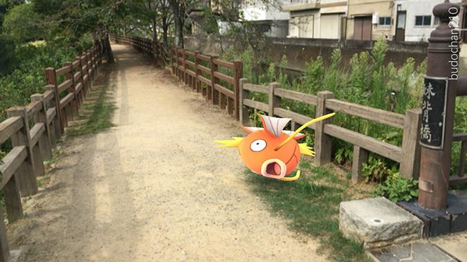姫路ポケモンの種5