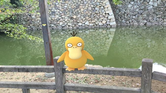 姫路ポケモンの種8