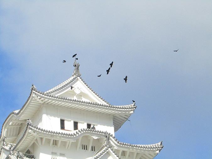 今日の姫路城カラス