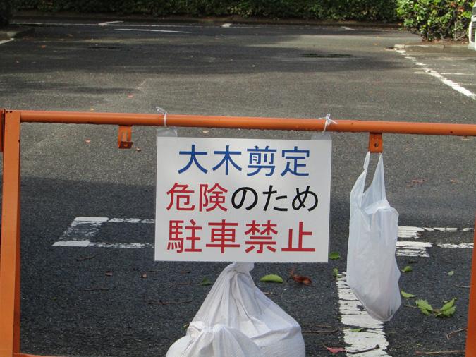 姫路城大木剪定2