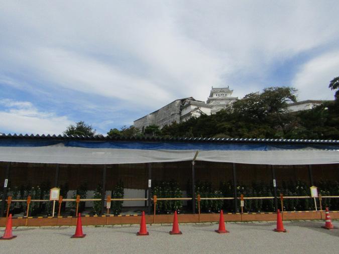 姫路城菊花展5