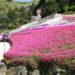 夢前町ヤマサ蒲鉾本社工場裏山の芝桜の小道の無料開放が始まってる【4/14〜5/6】