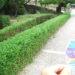 姫路城の木や草が剪定されて綺麗になってた!【今日の姫路城892日目】